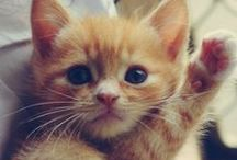 Cute!! / by Natalie Unsinn