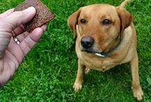 Pet Training Tips & Tricks / Pets can be a joy to play with, but it's important they know the rules to keep everyone safe. With these easy pet training tips and tricks, you'll have everything you need to guide your furry friends, along with treats and toys to reward their good behavior. #TuesdayMorning / by Tuesday Morning