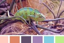 Chameleonci