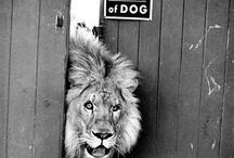 Terre des lions / by Ysabel Pages
