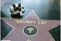 Grumpy Cat / by Debbie Flynn
