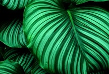 Tropical Green / The colour that relaxes!