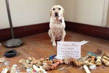 What a shame......... / Pet shaming