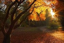 Paysage, Balade en automne / by Ysabel Pages