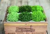 Plants / by whyzee