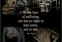 Animal Rights / For the love and respect of animals and because they don't have a voice.