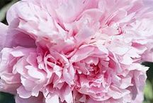 Pink / by Marian Thornton