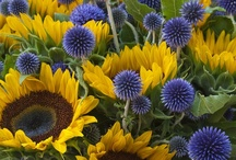 Denim and Sunflowers / This would truly be me~  / by Kevin Cavanaugh-Tucker
