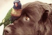 Amazing animals / by Jodie Hopps