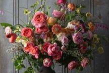 Plants & Flowers / by Marilyn
