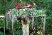 <*> GreenThumb <*> / Splendid garden design and ideas.
