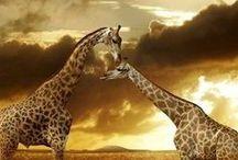 Animals | Animais / Photography | Animals | Fotografias de Animais