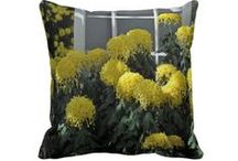 Yellow Flowering Irregular Incurve chrysanthemum / by Butterflies Are Blooming
