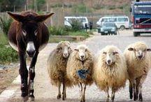Sheep make me smile!