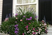 The Garden - Window Boxes & Containers / by Aunt Viv