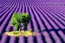 PURPLE / #colour #color #moodboard #inspiration #purple #lilac #lavender #violet #aubergine #plum #mauve #amethyst