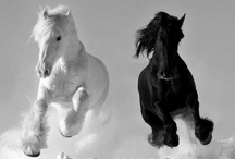 BLACK & WHITE / #black #white #blackandwhite #moodboard #inspiration #color #colour #shade #shades #tone #tones #neutral