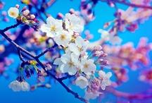 FLORAL / #floral #florals #flower #flowers #moodboard #inspiration