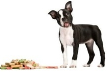 Ideas For The Dogs / Dog stuff: Entertainment, recipes, remedies and training.