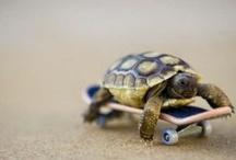 Turtles & Tortoises / by Janice McLean