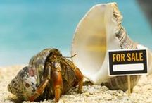 Hermit Crabs <3 / Ideas for Meatball, Rocky, Batman, Flash, and Superman. ;) / by Kimberly Blacketer