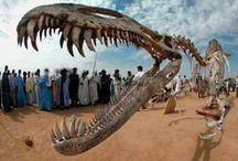Paleontology / by Janice McLean