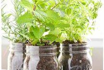 Plants - Garden - Terrace