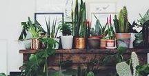 Pflanzen Wohnung / Wohnzimmer Deko / Pflanzen Wohnung / Wohnzimmer Deko: Pflanzen und Dekoration (flowers, plants, a green home, decoration) Pflanzen spenden Energie und Leben