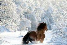 Horses and whispering / by Susan Viljoen