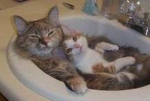 Cats / KITTIES!!!