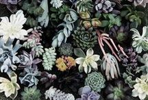 green thumbs / by Demelza Rafferty