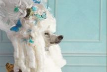 Poodles / All about my favorite dog