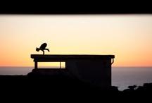 Yoga / by Kellielizabeth Cáceres