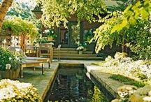 Whimsy Gardens / Inspiration for outdoor, indoor and container gardens.