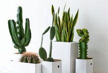 Plant + Flower