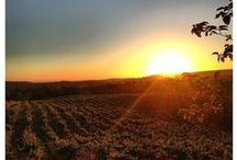 Amador Wine Country / Amador Wine Country #amador #wine