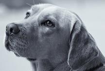 Dogs / by Sandy Herring Heiser