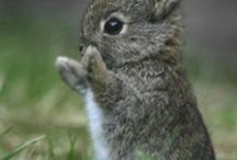Bunny / Every thing I need to know about how to care for my bunny. / by Marissa Isaacs