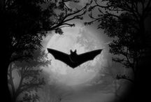 """Batty / Bats are mammals of the order Chiroptera (pronounced /kaɪˈrɒptərə/ from the Greek cheir (χείρ) """"hand"""" and pteron (πτερόν) """"wing"""") whose forelimbs form webbed wings, making them the only mammals naturally capable of true and sustained flight. Bats represent about twenty percent of all classified mammal species worldwide, with about 1,240 bat species divided into two suborders: the less specialized and largely fruit-eating megachiroptera, or flying foxes, and the more highly specialized and echolocating microchiroptera. / by Gairid"""