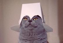 Cats @ TheAlbrecht