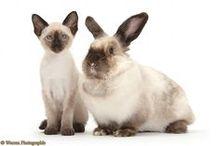 For my pets ::: Meus bichinhos