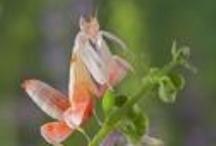 Bugs / by Annie Benabdallah