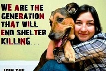 ANIMALS HAVE RIGHTS...like you do! / COUNTLESS of cute animal pictures are posted but we turn a blind eye on the ABUSED VOICELESS; let's propagate awareness...ADOPT, SPONSOR, FOSTER, DONATE OR VOLUNTEER..SAVE A LIFE. To be added, kindly leave comment at the ϠϠϠ follow me ϠϠϠ board & indicate the board that you like to follow....Happy Pinning Ü  / by agnusdei