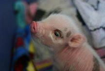 Pigllies. / by Elizabeth Webb