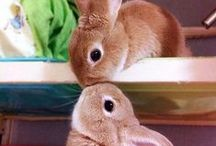 """Bunny Love / """"Rabbit's clever,"""" said Pooh thoughtfully. """"Yes,"""" said Piglet, """"Rabbit's clever."""" """"And he has Brain."""" """"Yes,"""" said Piglet, """"Rabbit has Brain."""" There was a long silence. """"I suppose,"""" said Pooh, """"that that's why he never understands anything."""" - A. A. Milne (Winnie-The-Pooh)  / by Judith Fisher"""