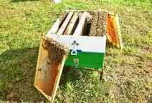 Οι κυψέλες μας (Our hives) / Πιστεύουμε ότι το μέλι πρέπει να εξάγεται από την κηρήθρα χωρίς καμία επεξεργασία, στην πιο αγνή μορφή του. Γι αυτό το λόγο το μέλι μας δεν θερμαίνεται σε κανένα στάδιο της παραγωγής του (άθερμο μέλι) και δεν αναμειγνύουμε διαφορετικά είδη μελιού (χαρμάνια).