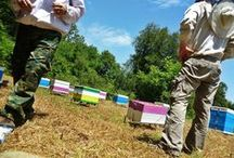 Οι μελισσοκόμοι (The beekeepers) / Κουρασμένοι απ' τους ρυθμούς της πόλης και παρά την απουσία ουσιαστικού σχεδίου αποκέντρωσης, αποφασίσαμε να πάρουμε τα βουνά για μια νέα ζωή με αυτάρκεια και αυτονομία. Αφήσαμε λοιπόν τα γραφεία και γίναμε νομάδες μελισσοκόμοι των Τζουμέρκων και όπως οι παλιοί κτηνοτρόφοι μετακινούνταν απ' τις αετοκορφές στα χειμαδιά έτσι και εμείς, ακολουθούμε τις μέλισσες.