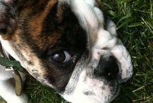 Prevent Pet Loss, Pet Loss and Grief Support  / Prevent Pet Loss, Pet Loss and Grief, Passing Over the Bridge
