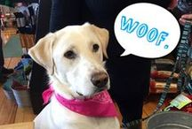 The Wednesday Woof / The wonderful woofly dogs that visit us in the shop!