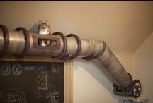 Pet Caves / Cool Awesome Dog House and Cat trees